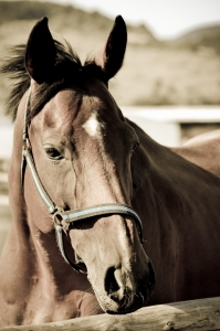 Fear & Anxiety in Horses